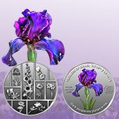 Dark-Purpled Iris